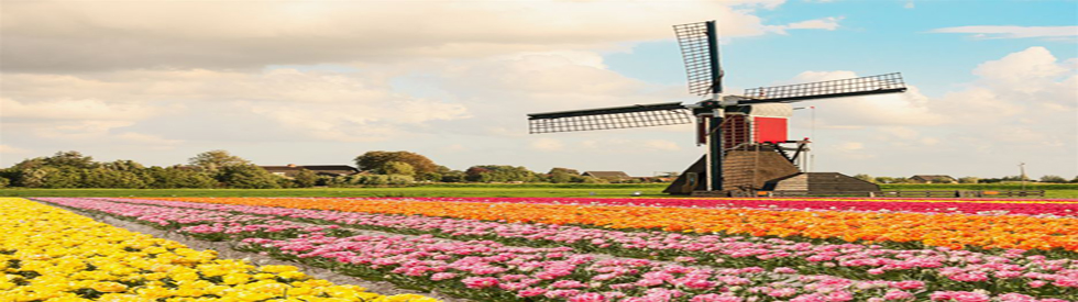 Study in Netherland